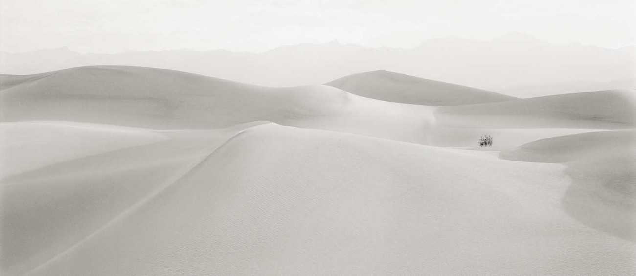 Lone bush, Death Valley dunes, California, 1981