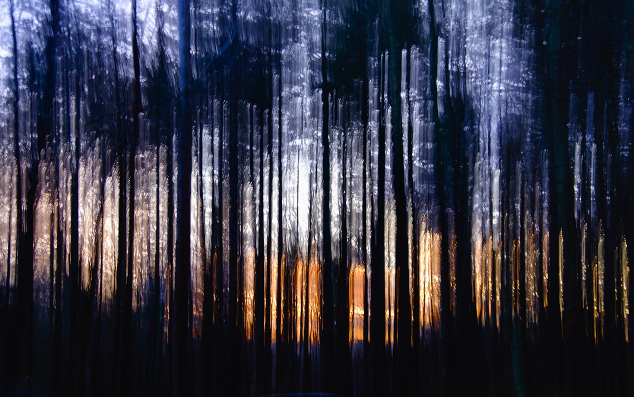 Sunset forest, Catskills, 2015
