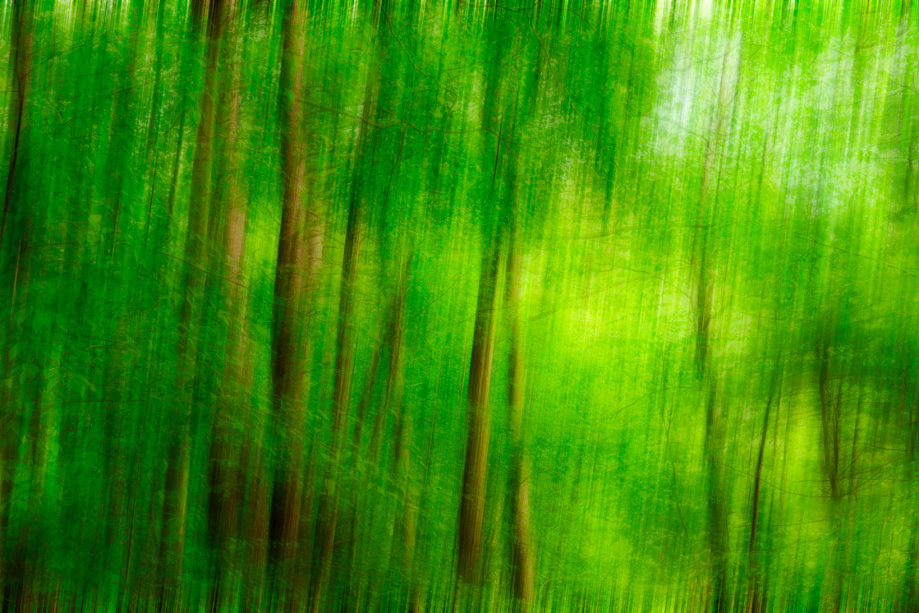 Spring forest, Walden Pond, 2013