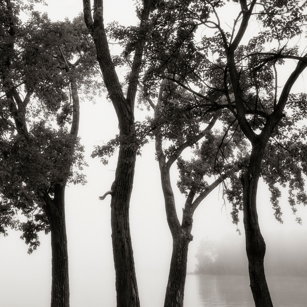 Four trees and the Hudson River, Hudson, New York, 2013
