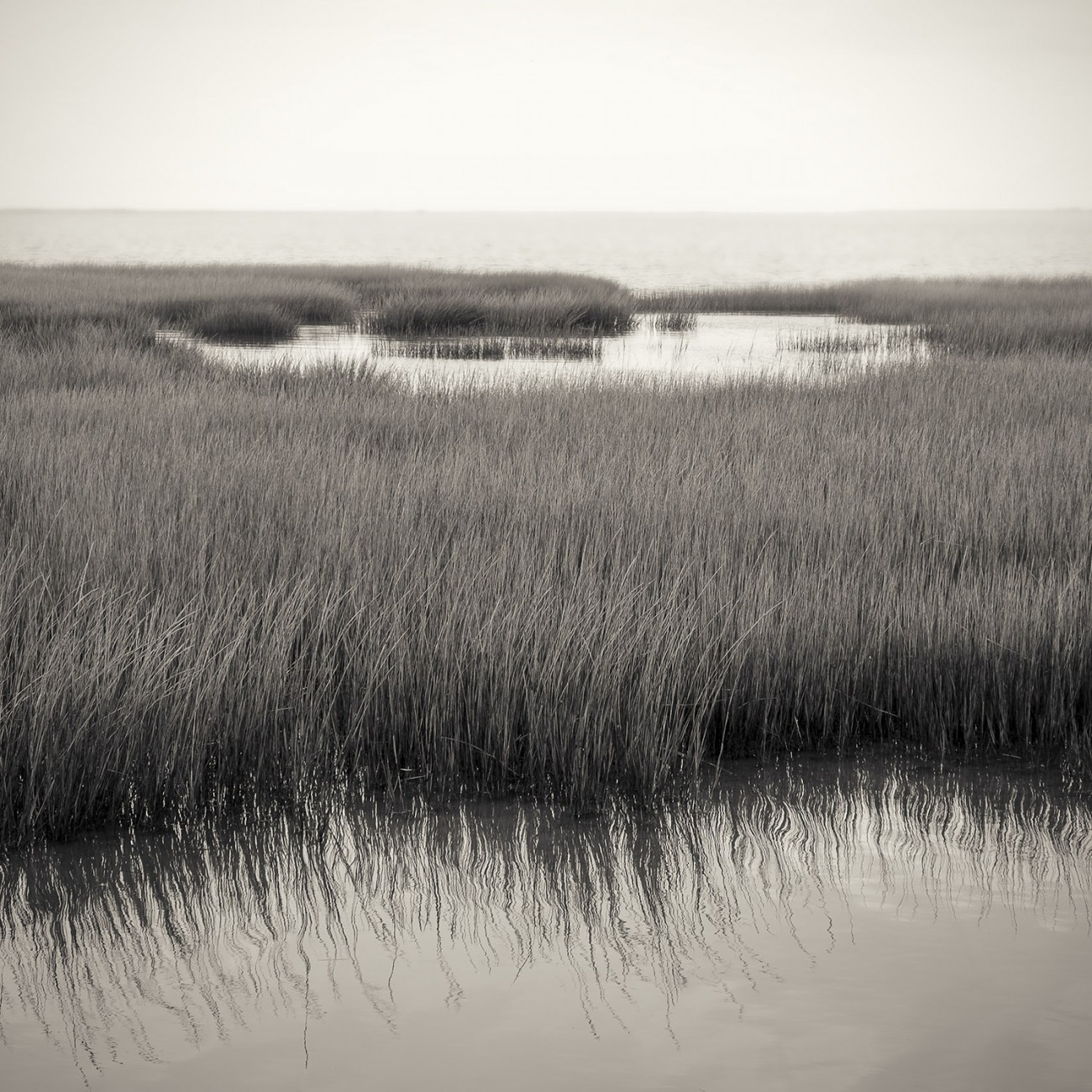 Marsh grass, Assateague Island, 2014