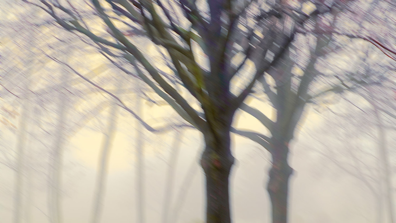 Trees with morning fog, 2014