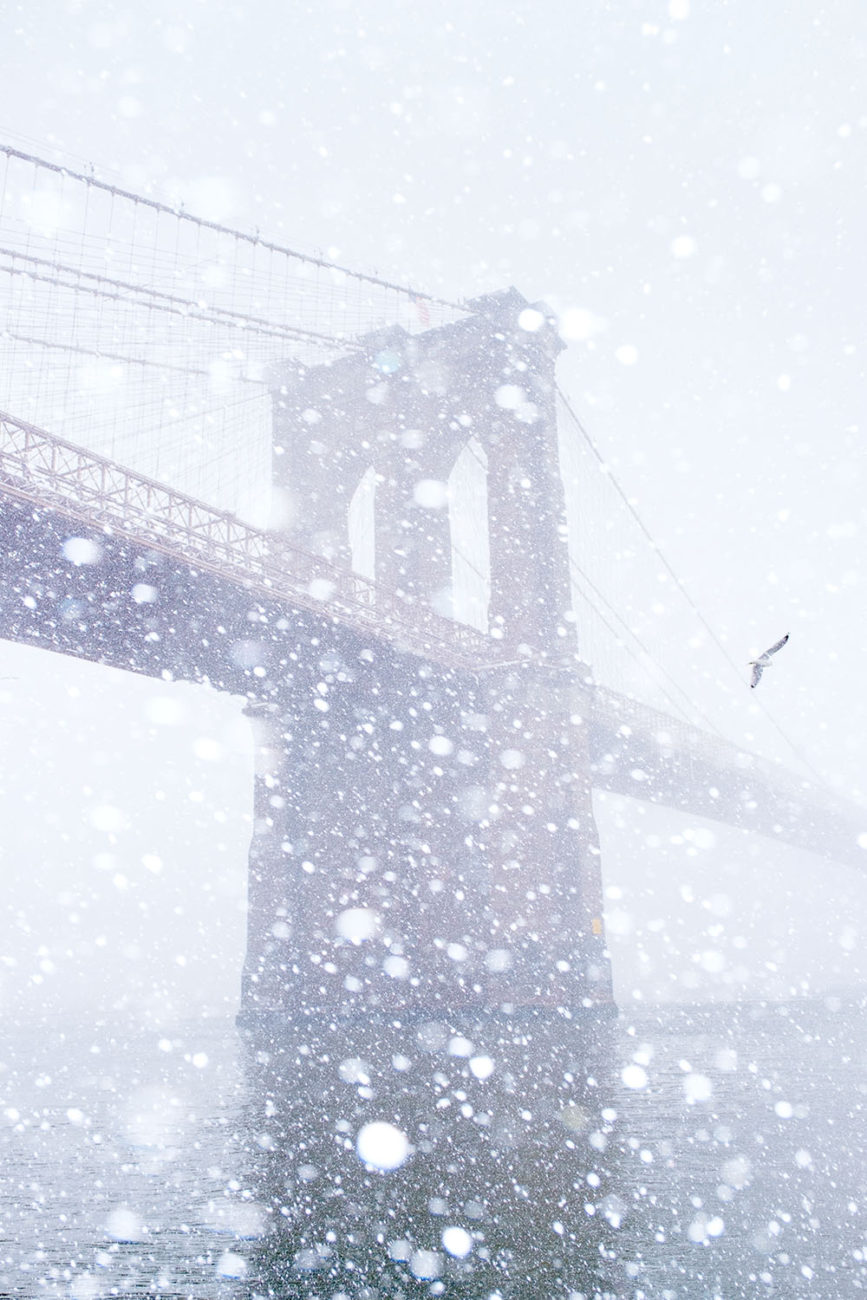Brooklyn Bridge with snow and gull, 2017