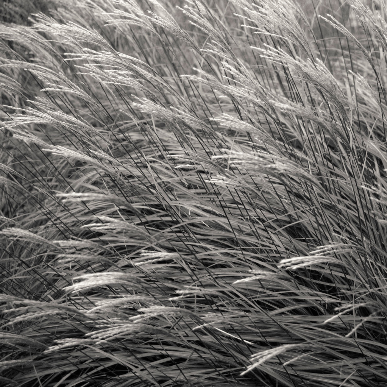 Shore grasses, California, 2006