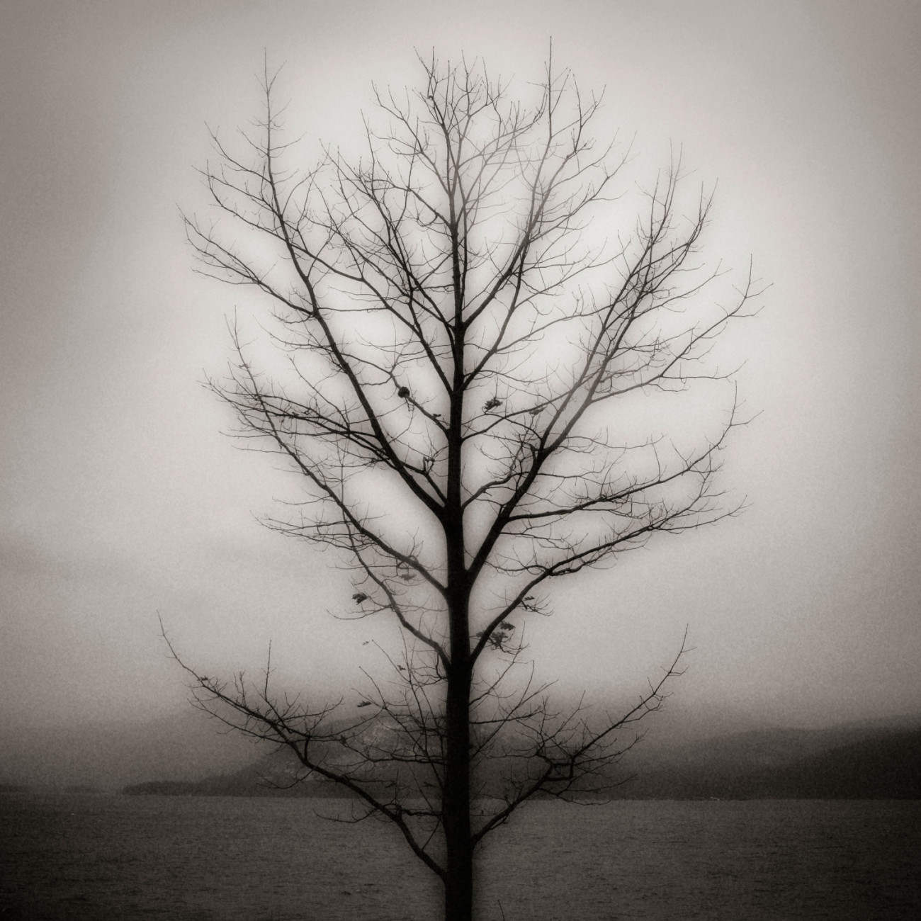 Tree in winter, Lake George, NY 2006