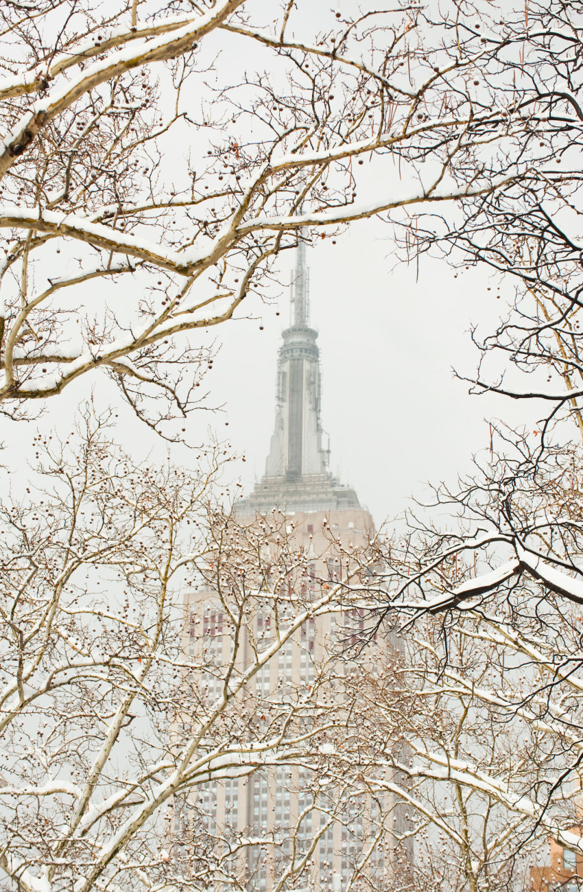 Snowy trees and Empire State Building, NY, 2010