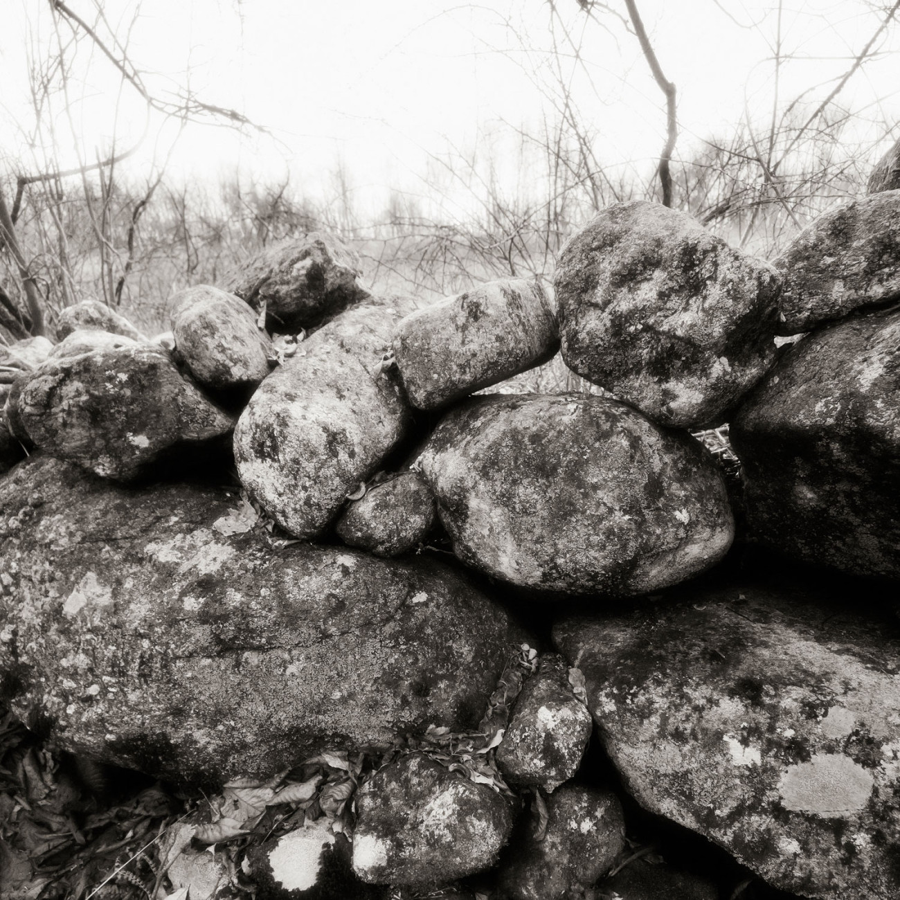 Stone fence, Litchfield Hills, Connecticut, 2011