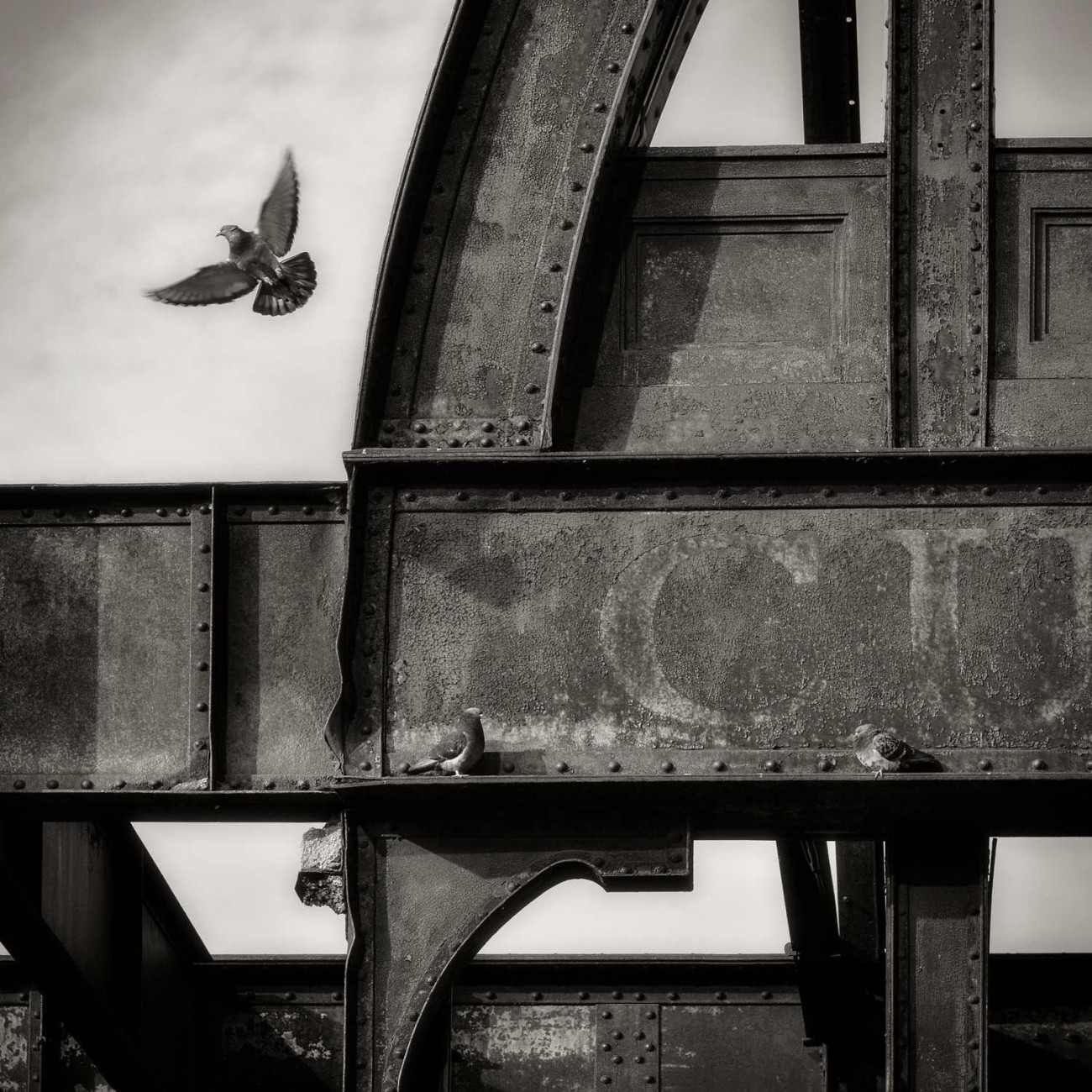 Steel pier skeleton and pigeon, New York, 2013
