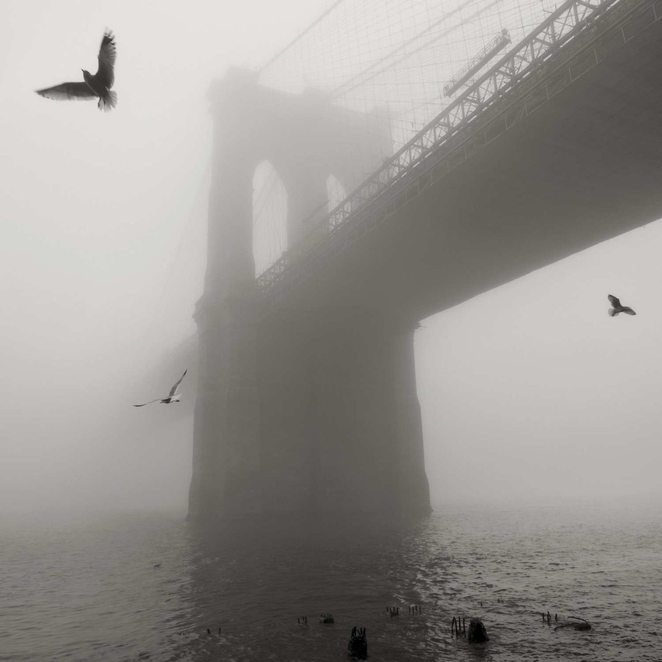 Brooklyn Bridge and gulls in fog, NY, 2014