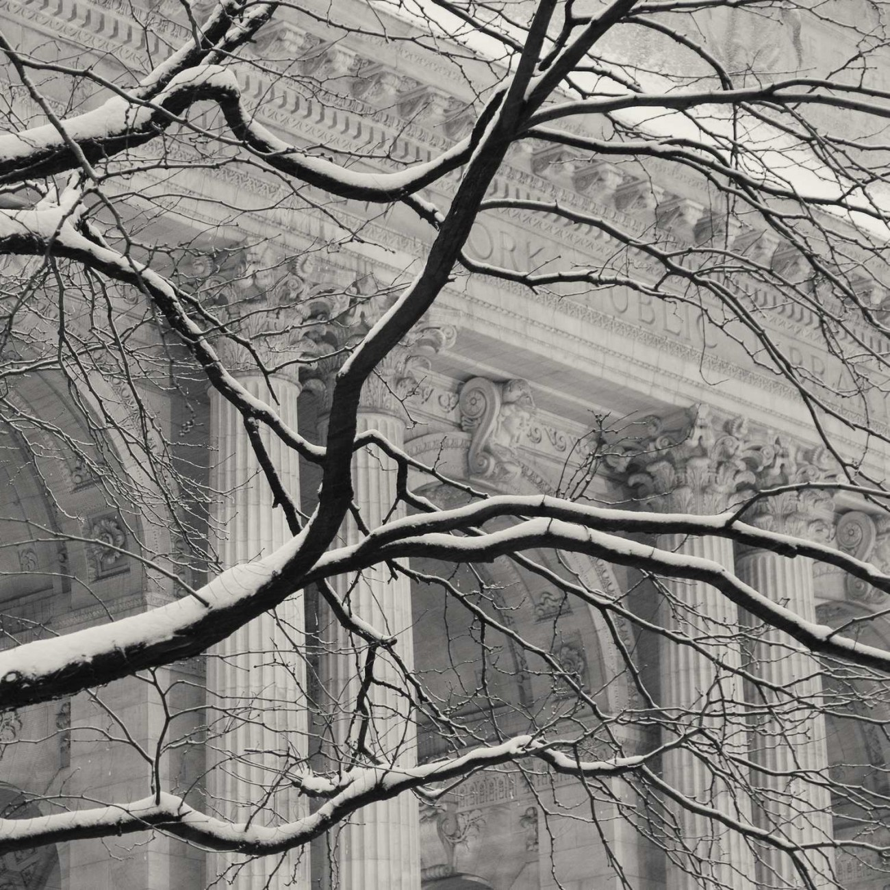 New York Public Library and tree with snow, NY, 2015