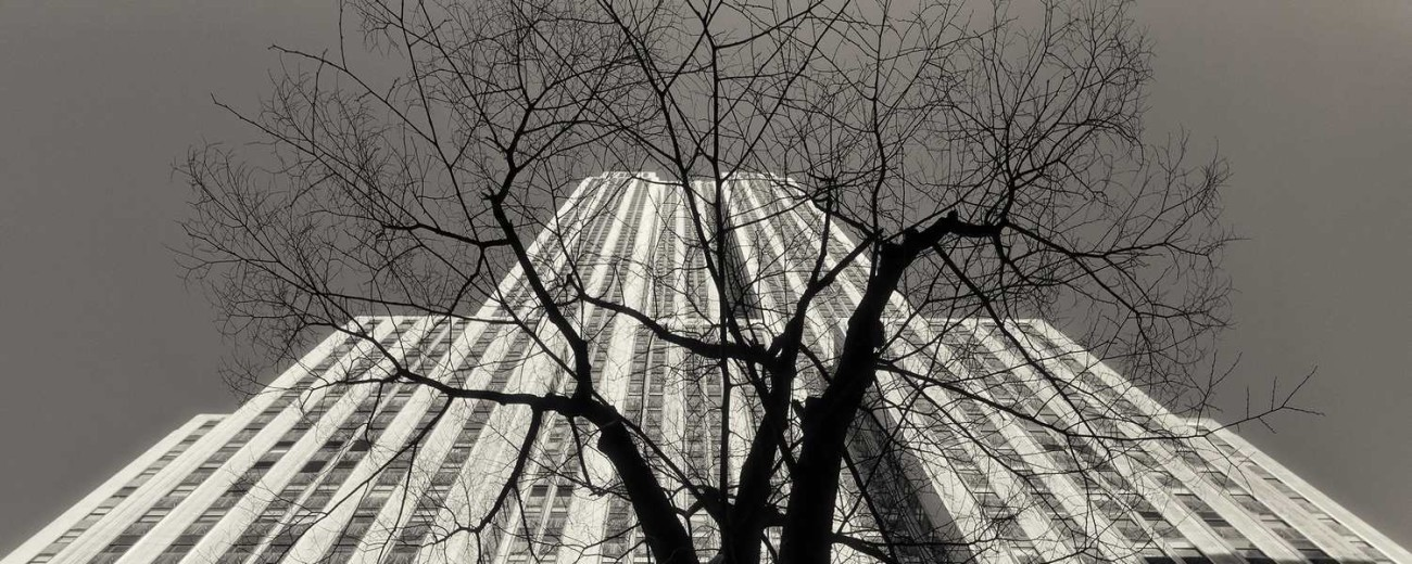 Empire State Building and winter tree, New York, 2011