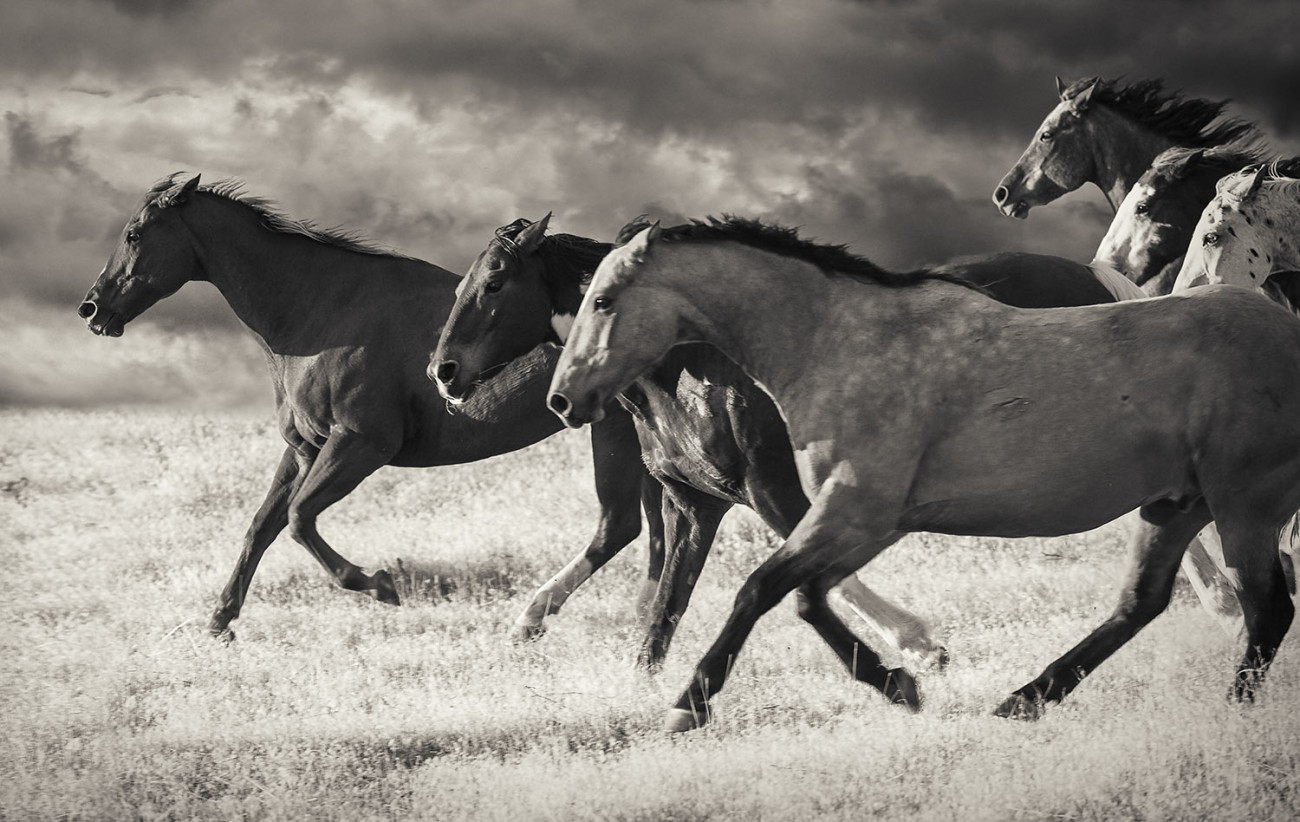 Leading the pack, Wyoming, 2009