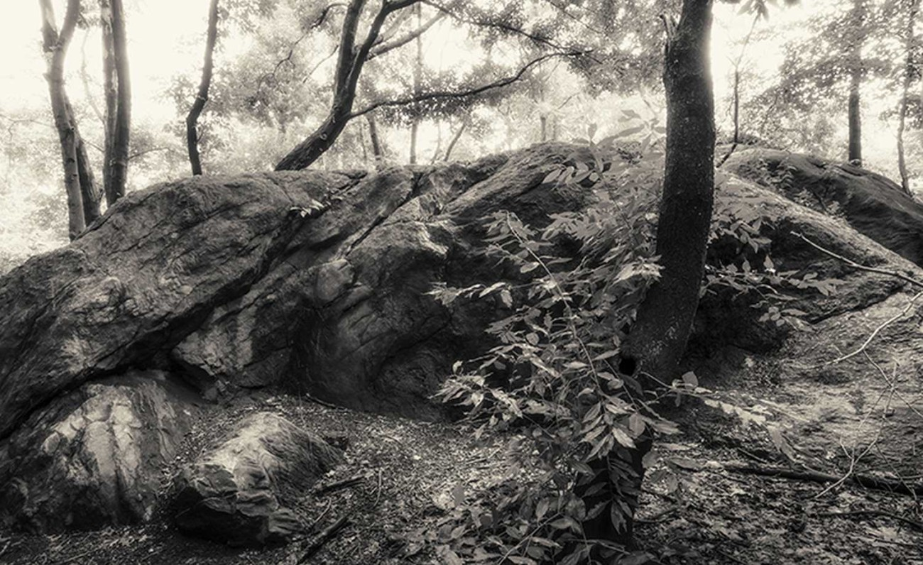 Central Park Wilderness, ti01067304bw