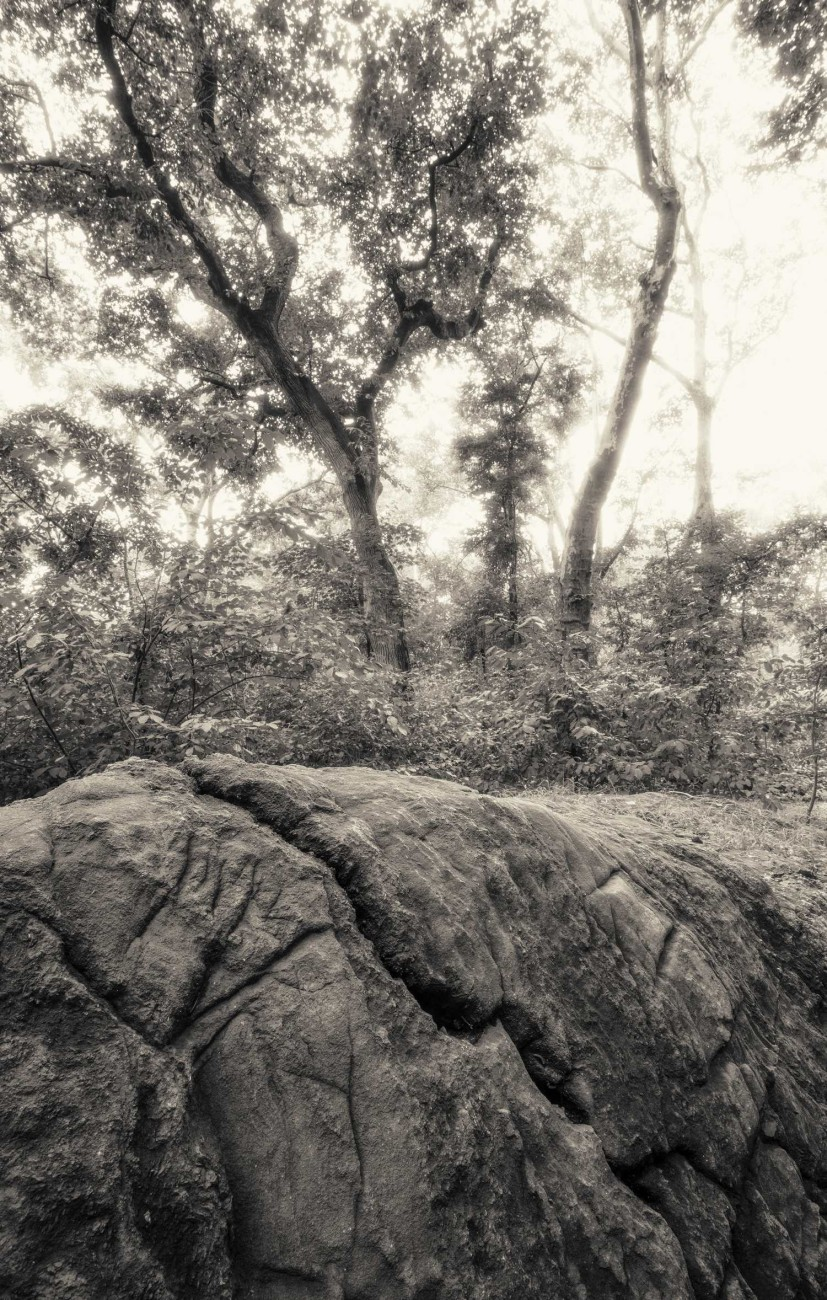 Central Park Wilderness, ti01067307bw