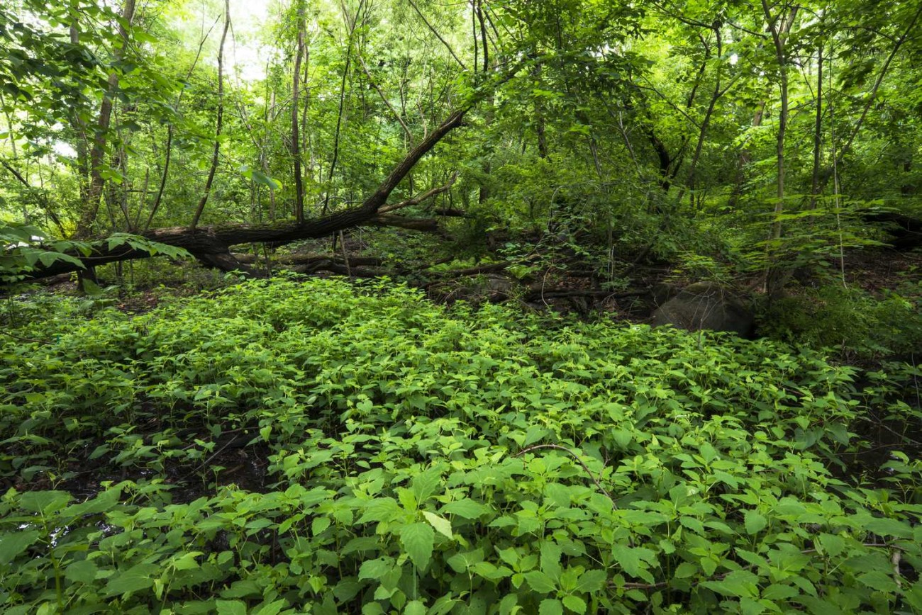 Central Park Wilderness, ti0165627lg