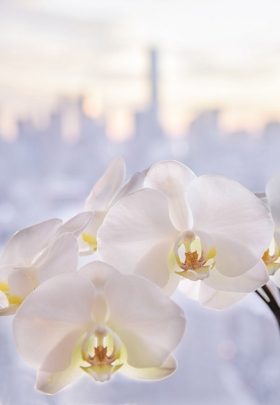 Orchids and lower Manhattan, study 1, 2016
