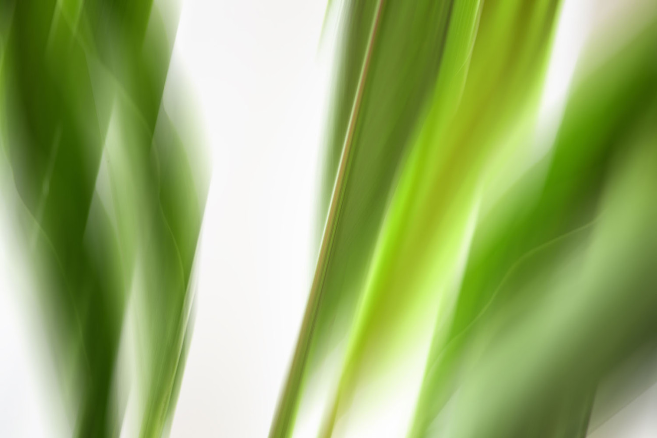 Plant leaf movement, 2015