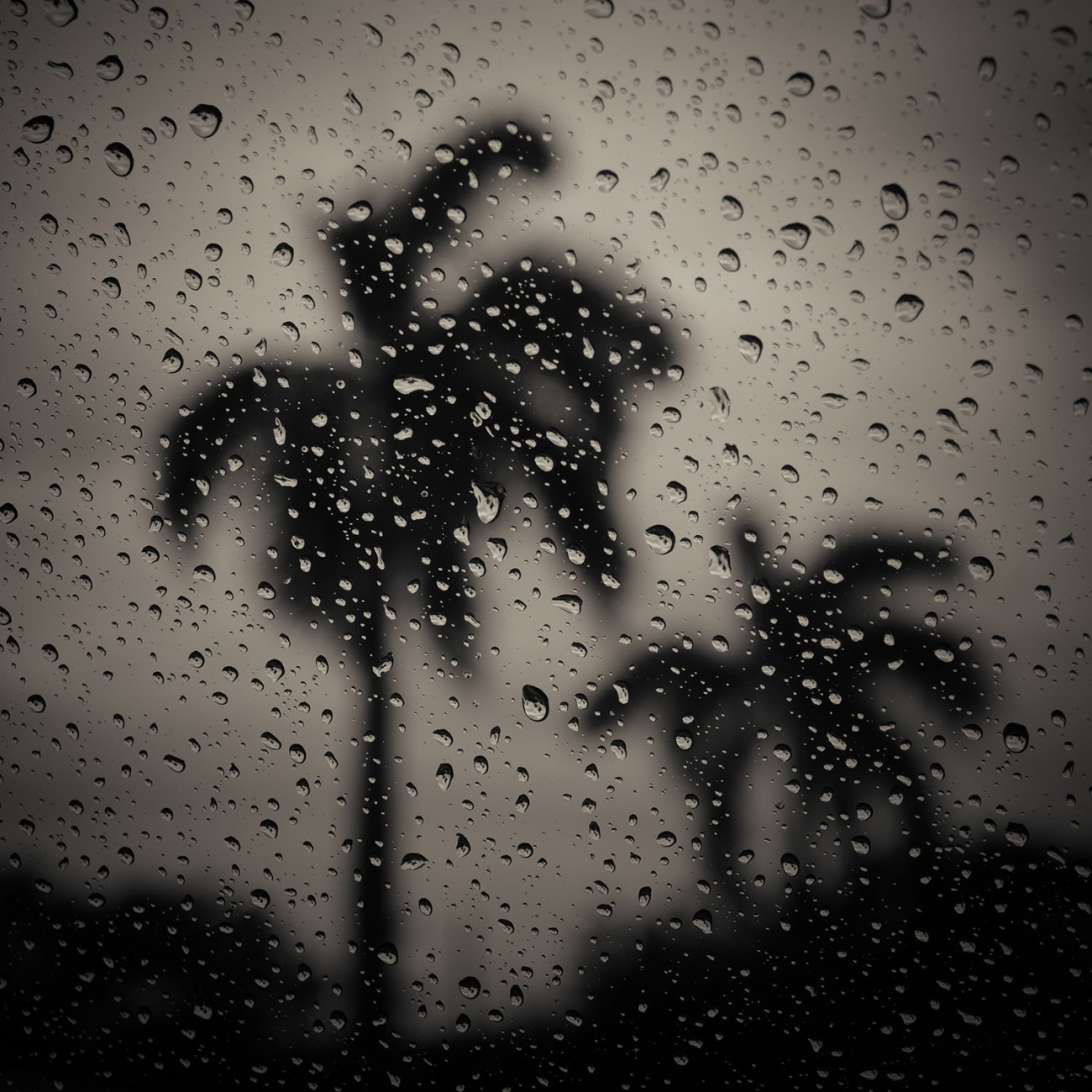 Rain and palms, study I, Florida, 2017