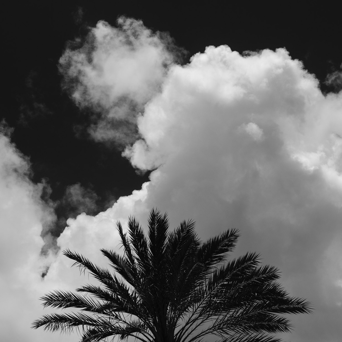 Palm top and cloud, Florida, 2017