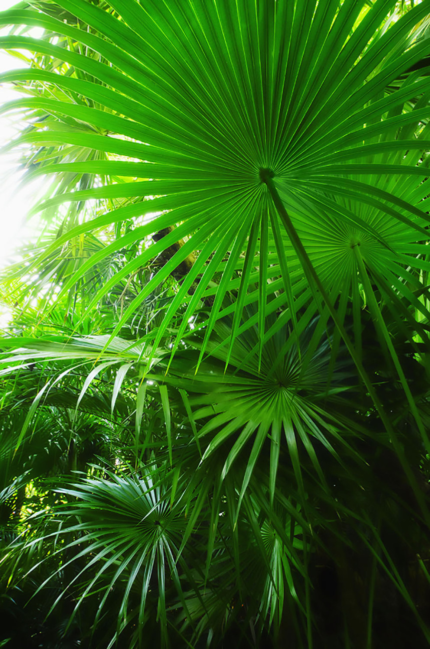 Tropical plants, Mexico, 2012