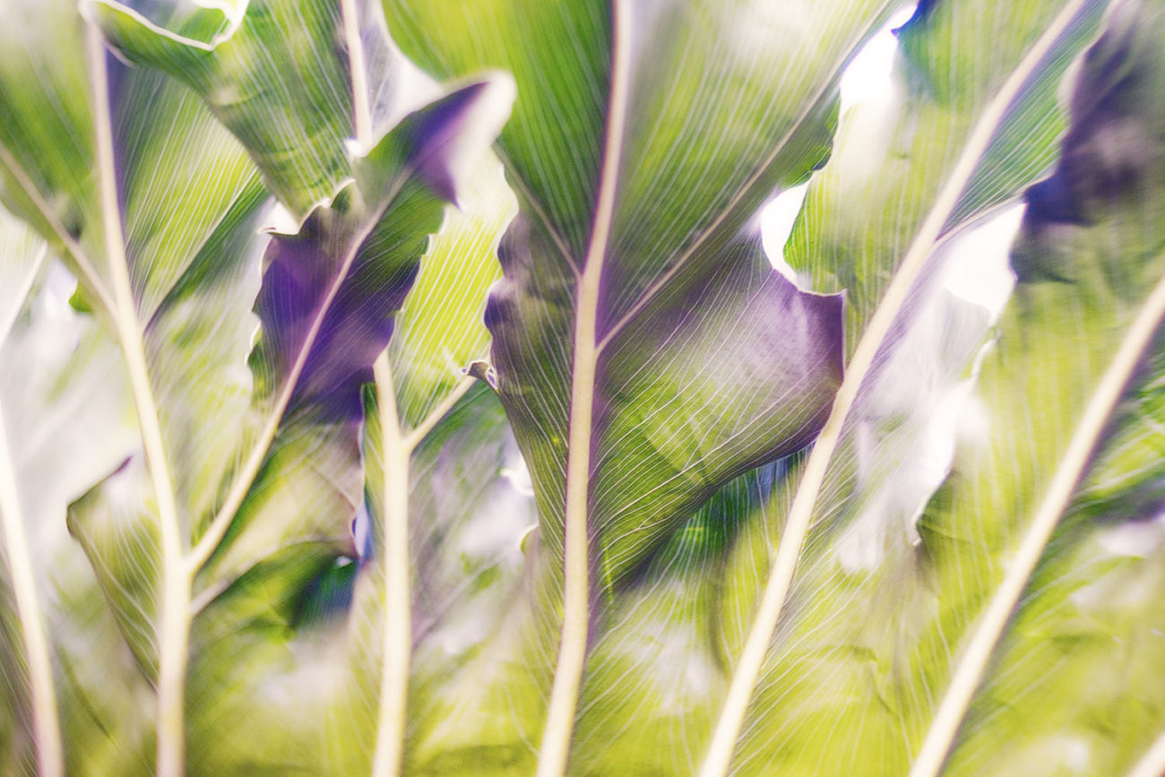 Tropical leaves, Florida Keys, 2018