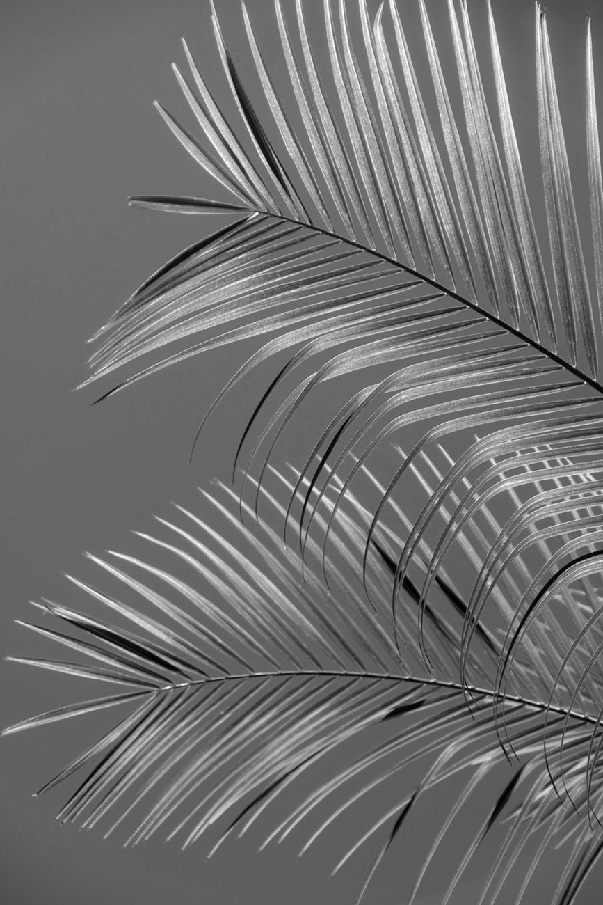 Silver fronds, Florida, 2017