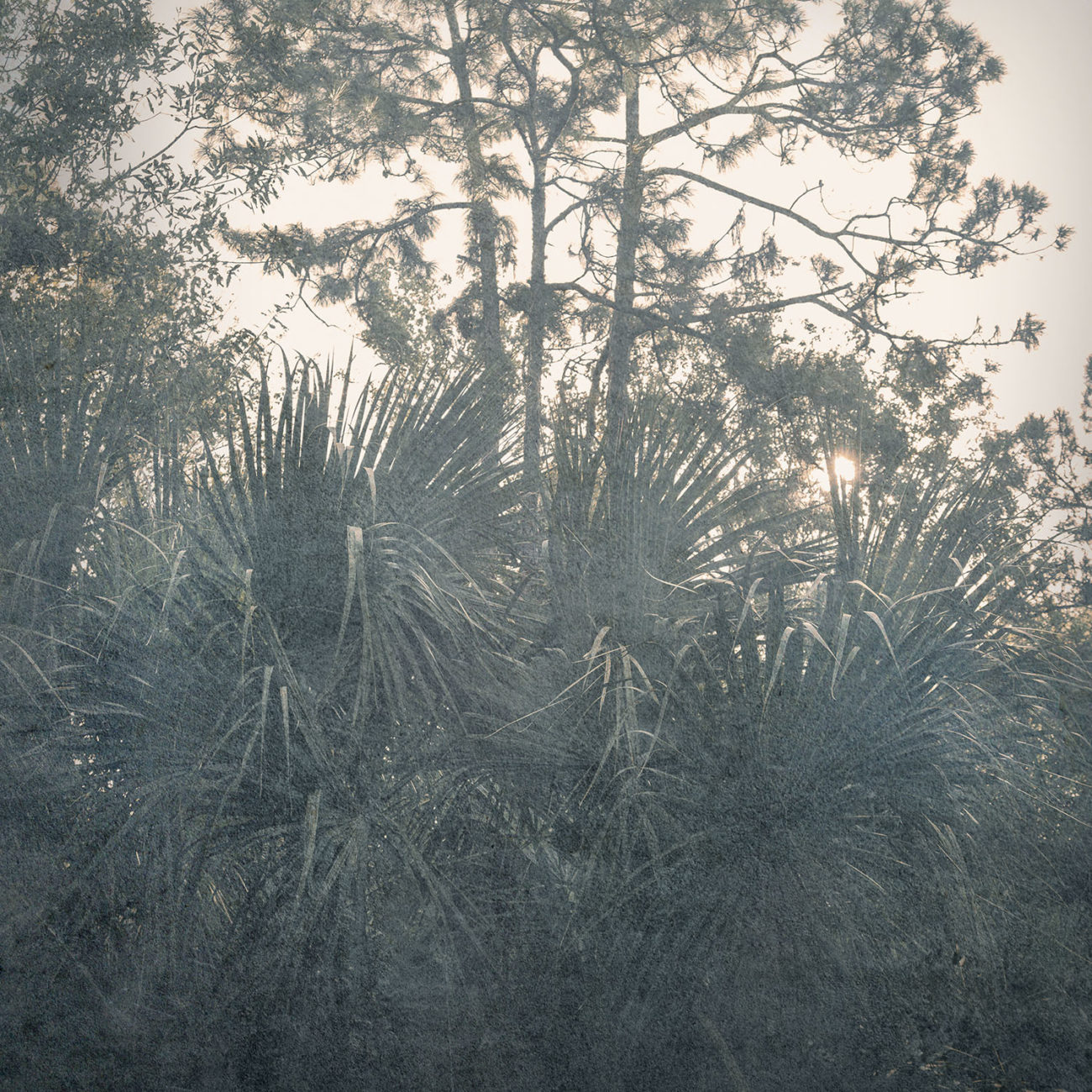 Palmetto sunrise, 2018