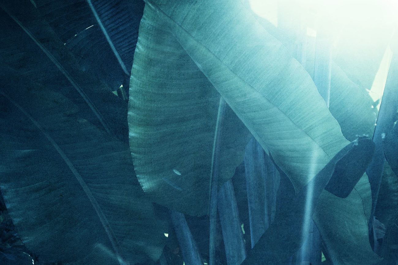Banana leaves and sun flare, 2018