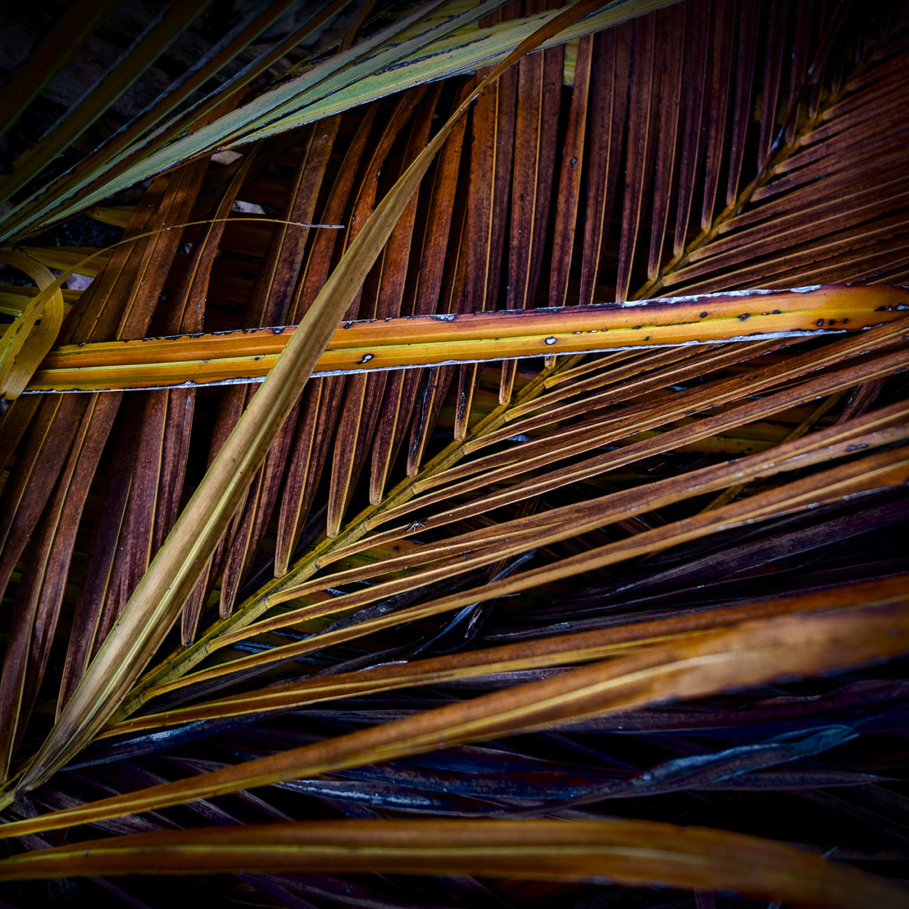 Green and yellow palm leaves, 2019