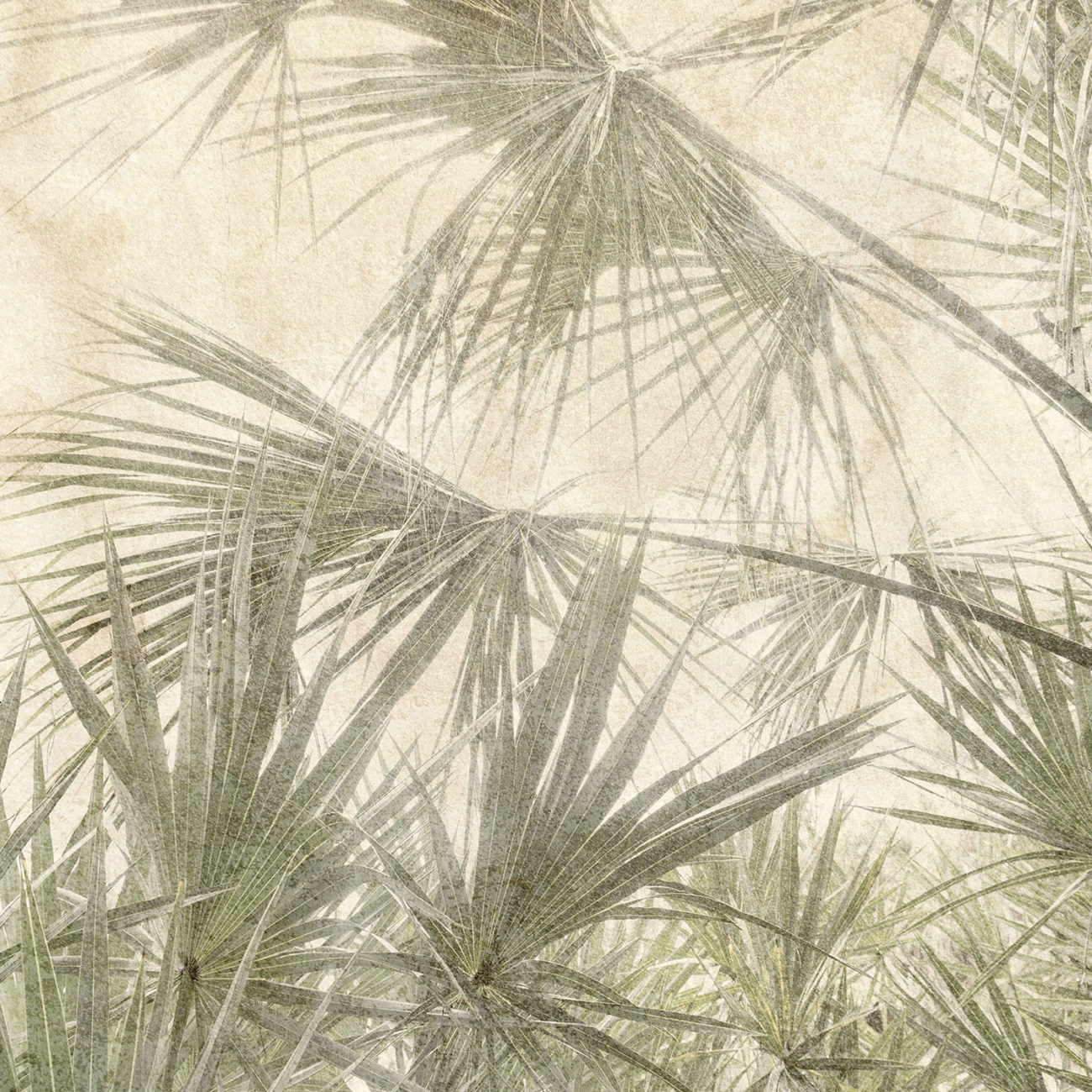 Sabal palm leaves 1, 2019
