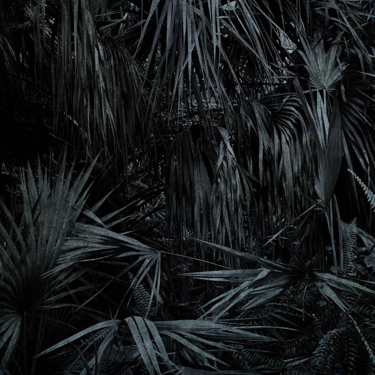 Sabal palms, Study in blue II, 2019