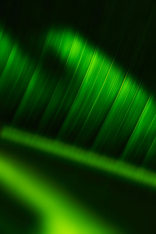 Close-up palm frond, 2013