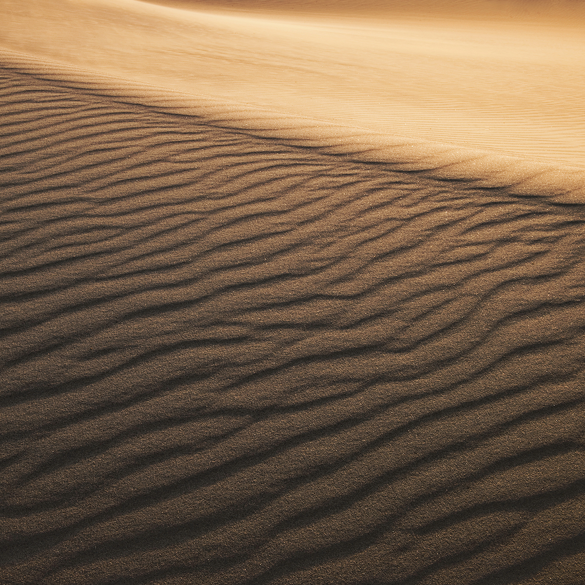 Dune wave pattern, Death Valley, 2009