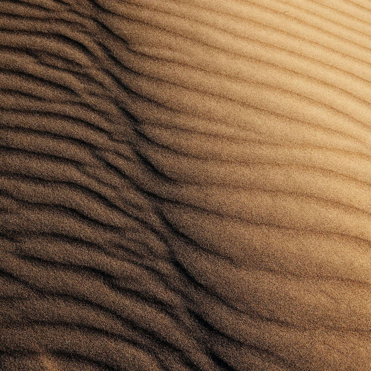 Dune wind pattern, Death Valley, 2009