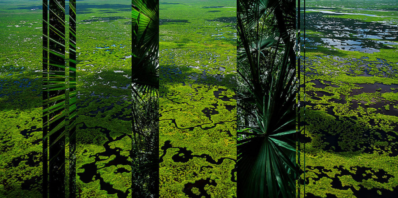 Above and below the Everglades
