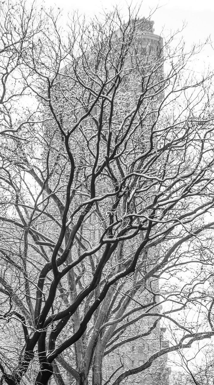 Flatiron and winter trees, NY, 2016