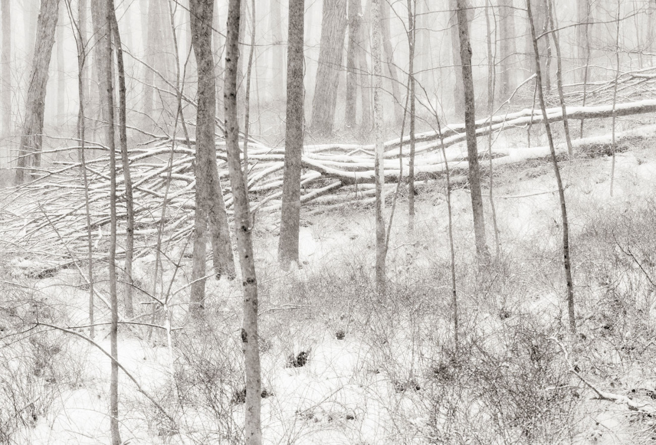 Winter forest with fallen trees, Conn., 2008