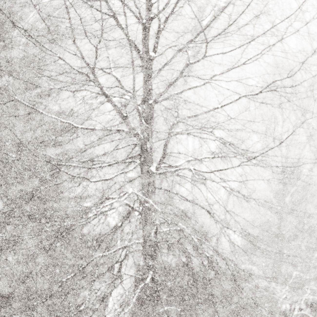 Falling snow and rree, Washington, Conn., 2008