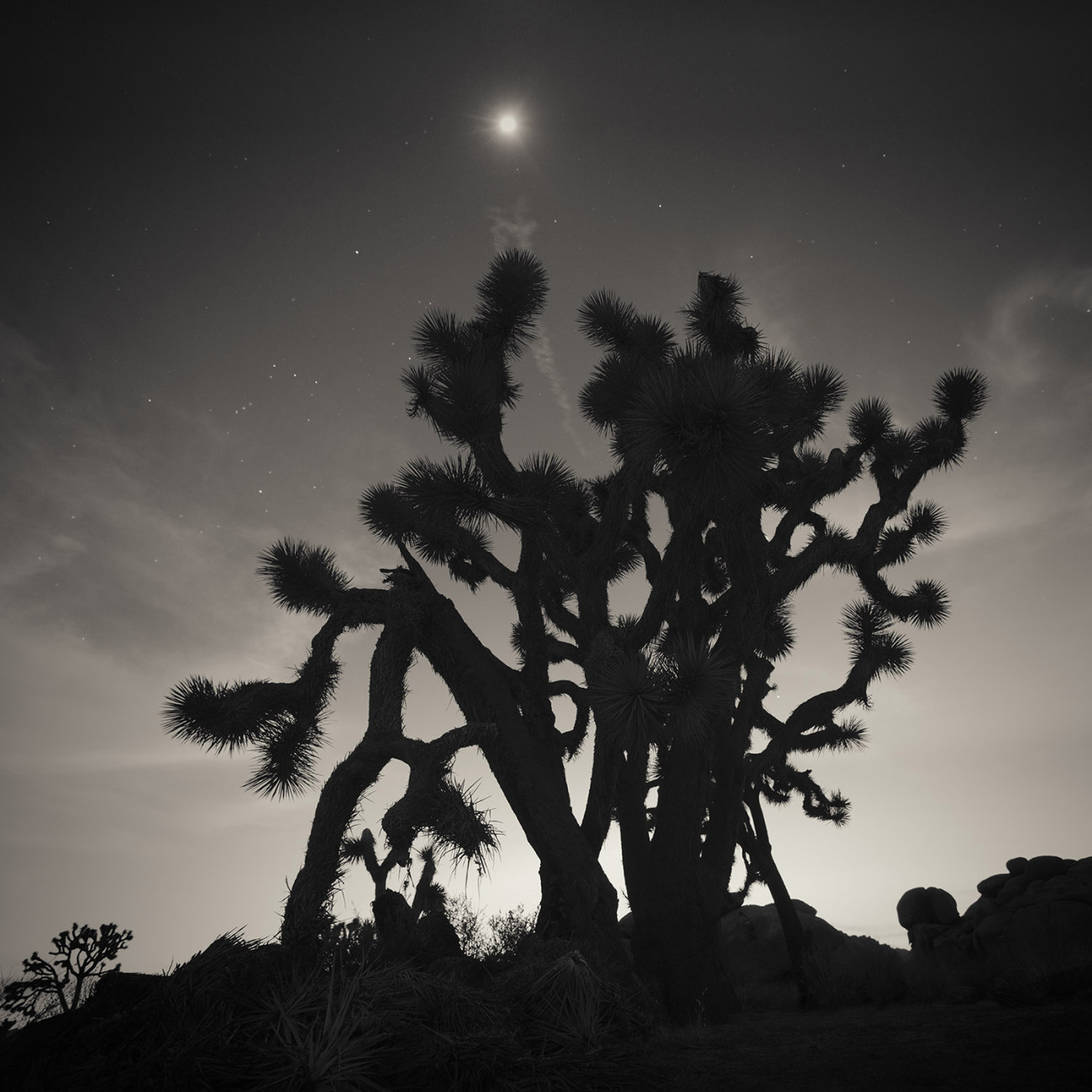 Orion and Joshua Tree, CA, 2012