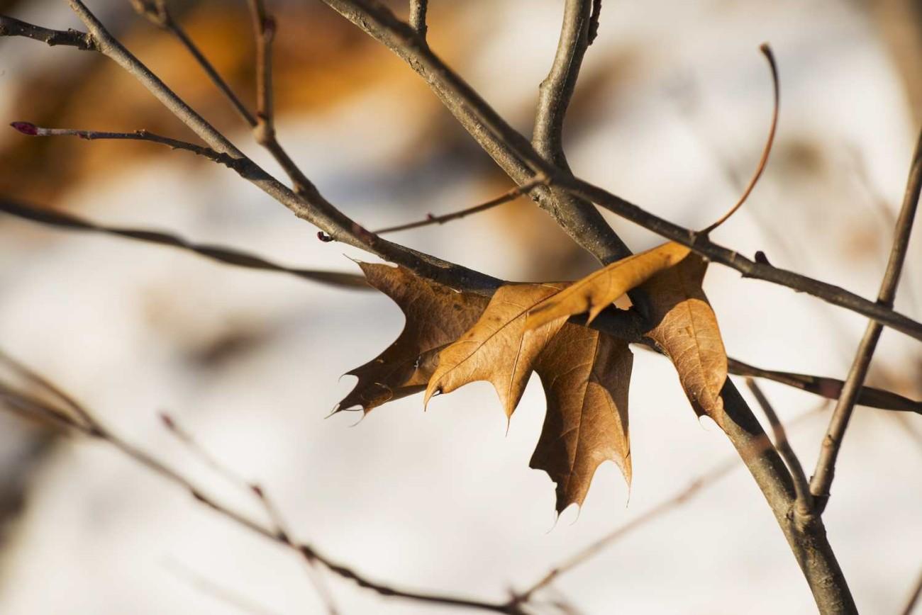 Walden Pond 4