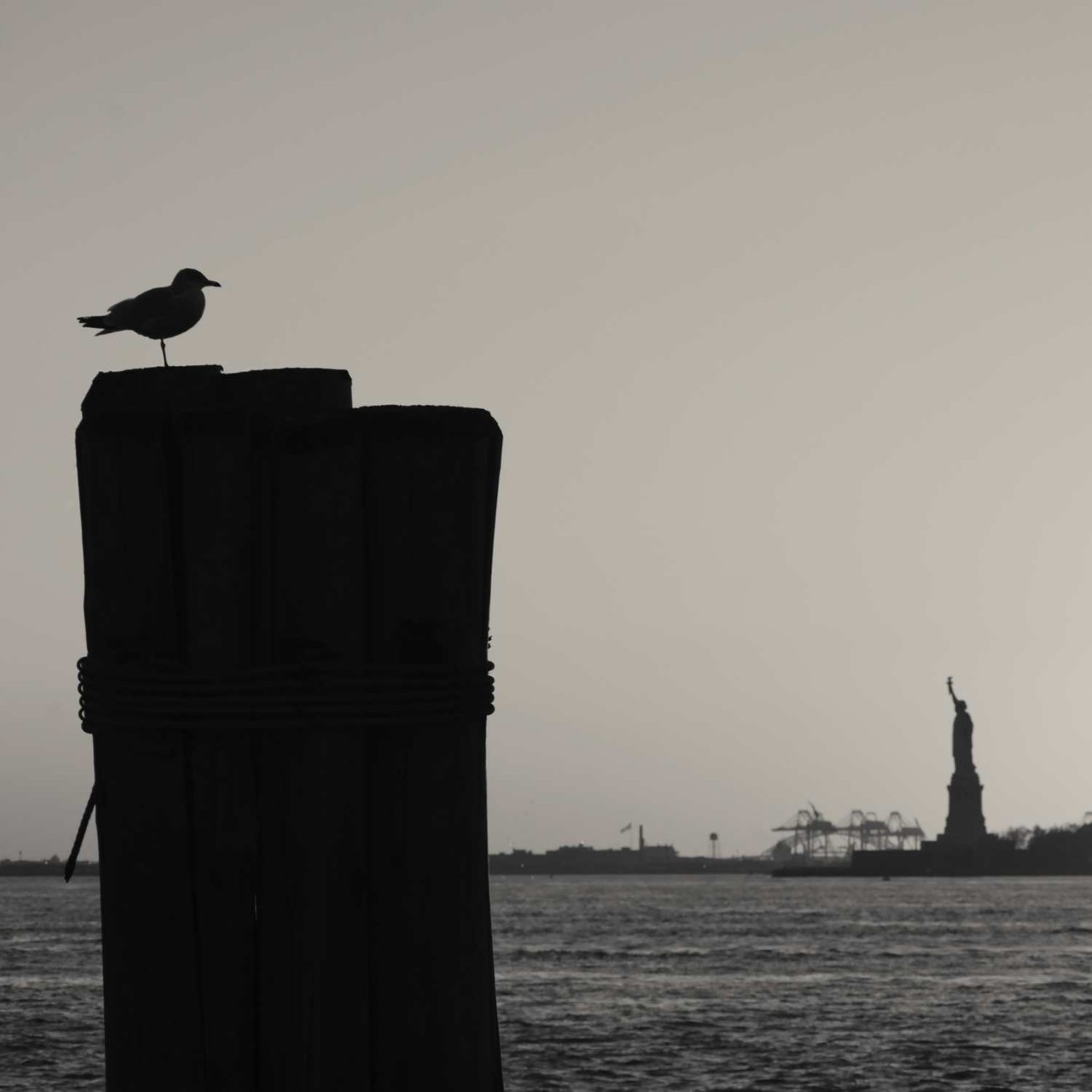 Gull on dock piling, New York Harbor, 2010