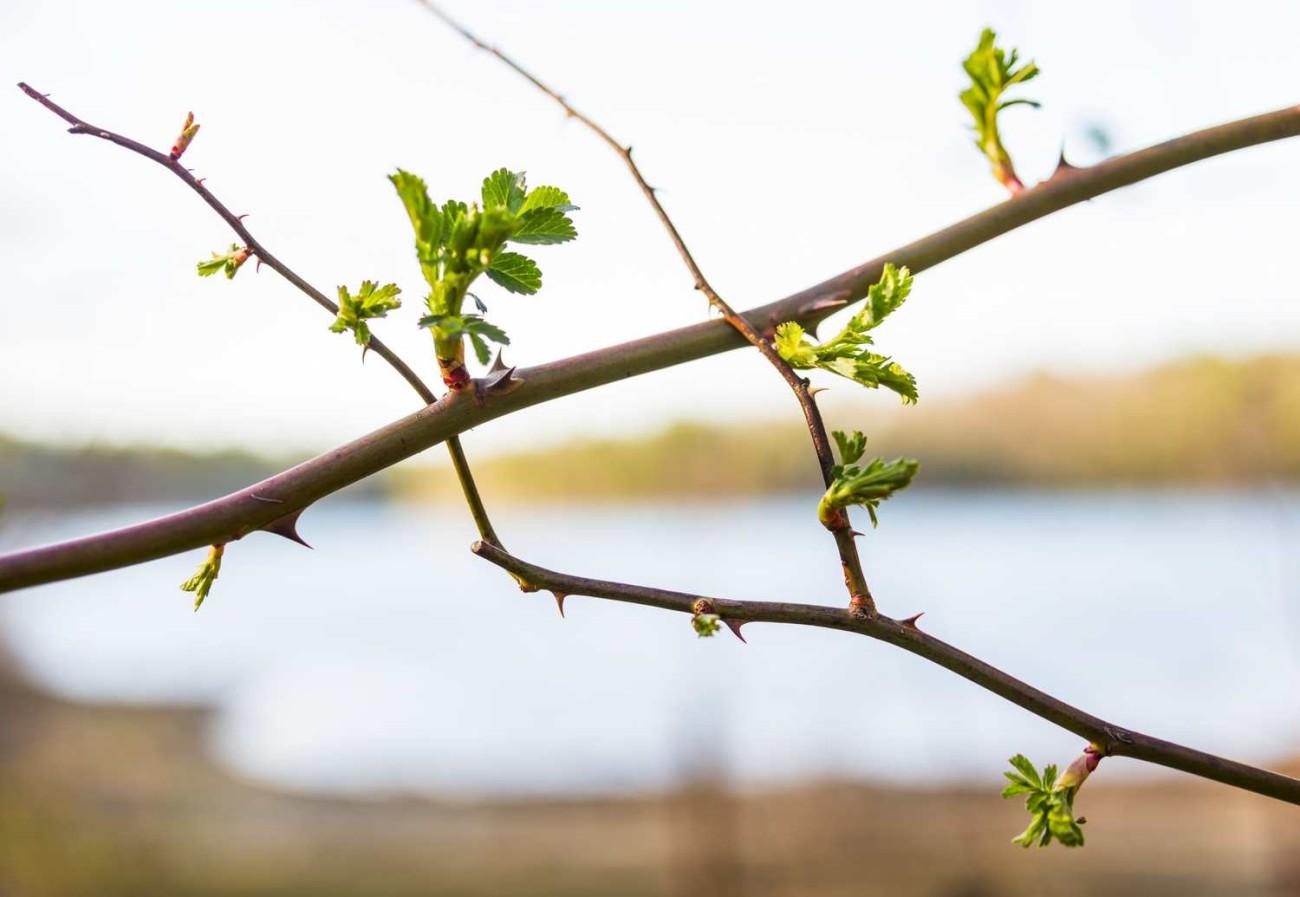 Walden Pond 30