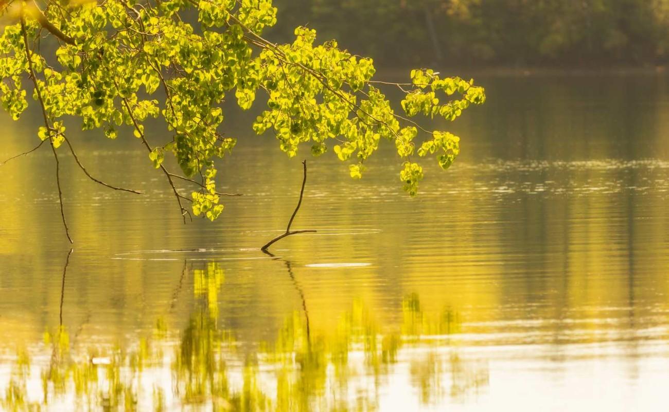 Walden Pond 18
