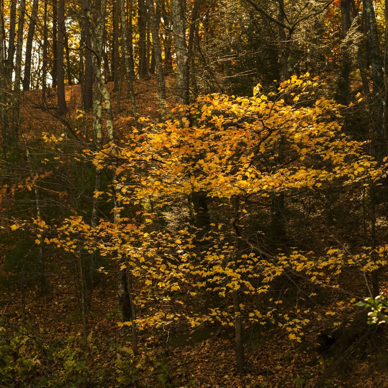 Walden Pond 44