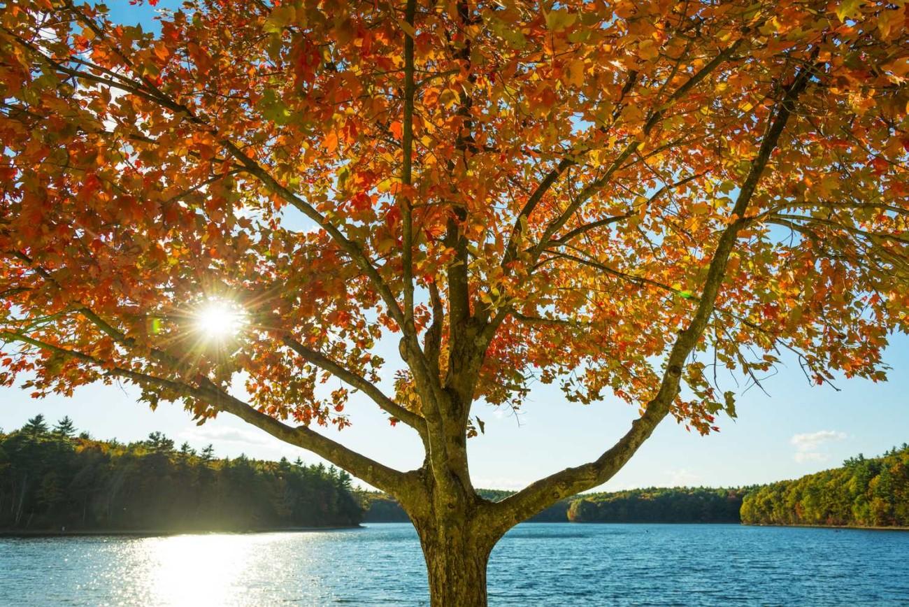 Walden Pond 46