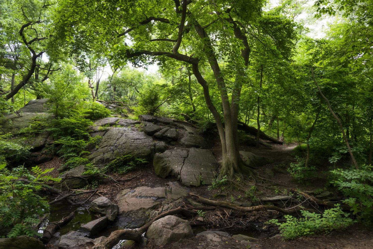 Central Park Wilderness, ti01066171