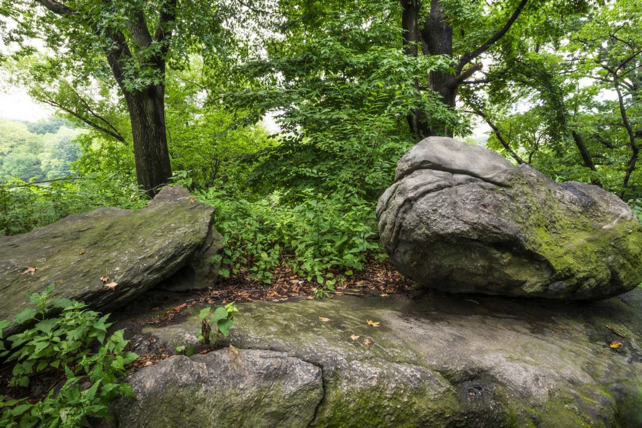 Central Park Wilderness, ti01067302