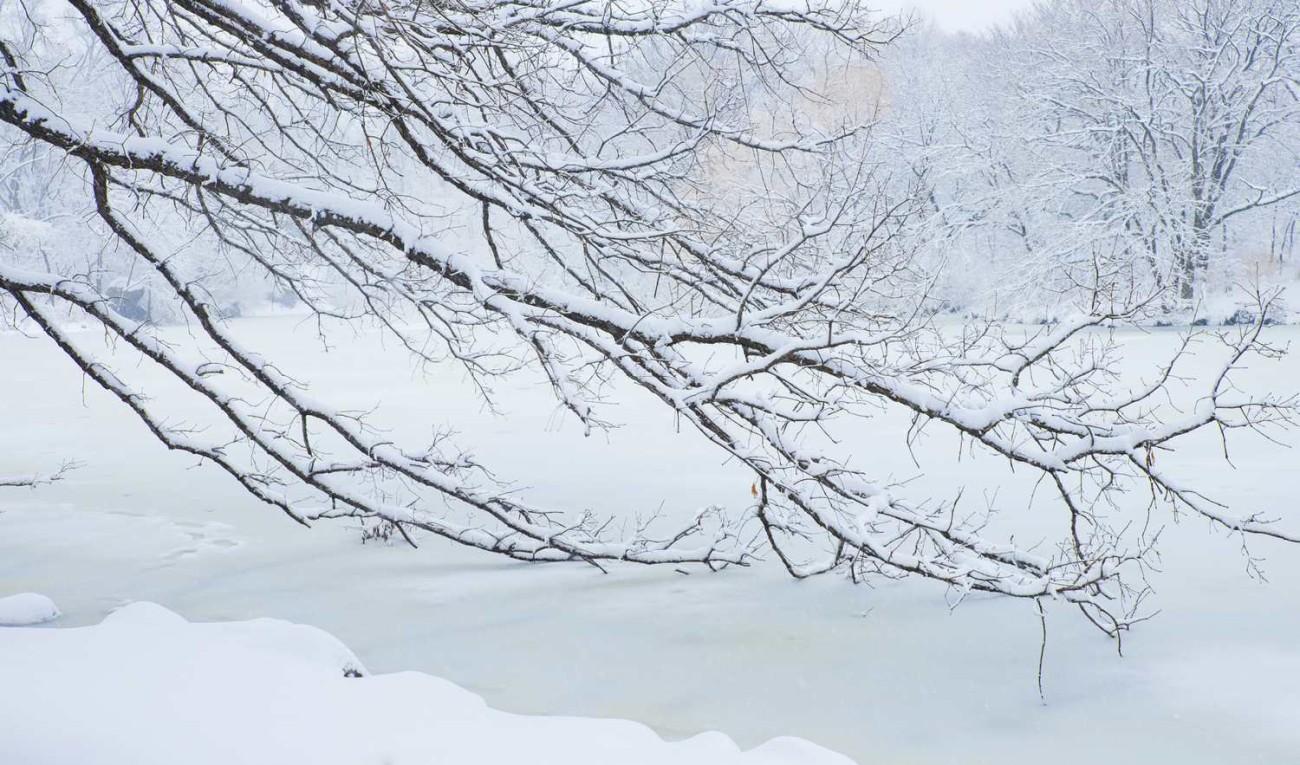 Central Park Wilderness, ti0164929-ti01071342