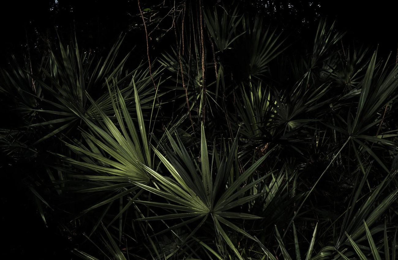 Palmetto forest, 2020