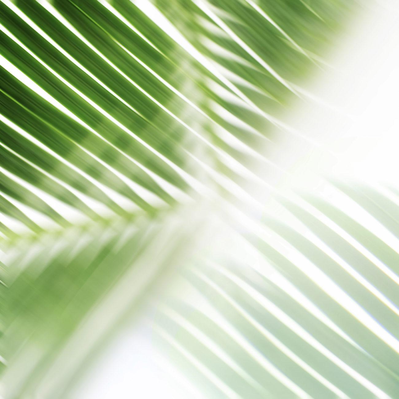Palm leaf and sun, Florida, 2015